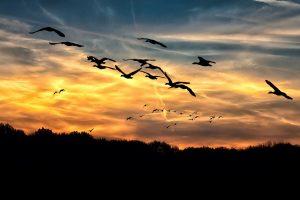 Geese & God Winks