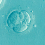 Photo of Embryo