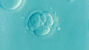 Photo of Embryo, Our Way is the Wrong Way if it's Not God's Way, TeresaTomeo.com