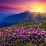 Sunrise over blue mountains with pink flowers on landscape