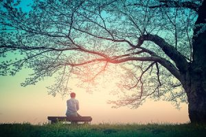 Man sitting on bench under tree